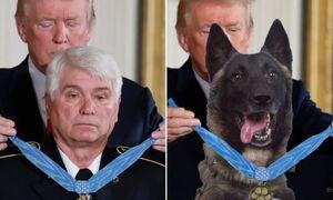 تصویر اهدای مدال به سگ یابنده البغدادی جعلی است +عکس