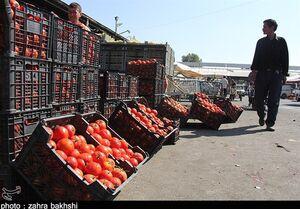 قیمت مصوب ۵۸ قلیم میوه و سبزی اعلام شد/ گوجه ۱۰۰۰ تا ۱۶۰۰ تومان+جدول
