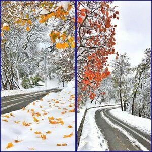 عکس/ تلفیق زیبای پاییز و زمستان