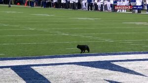 فیلم/ ورود گربه دردسر ساز به زمین مسابقه