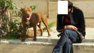 """حمله سگ """"پیت بول"""" به دو شهروند در محله دزاشیب"""