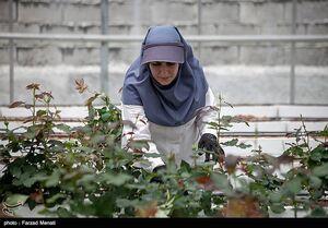 عکس/ نخستین گلخانه تمام ایرانی