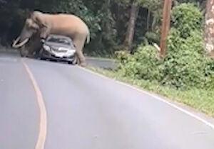 فیلم/ حمله فیل عصبانی به یک خودرو