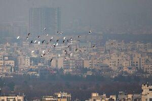 راهکارهای طب سنتی برای مقابله با آلودگی هوا