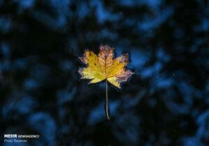 عکس/ رنگهای زیبای پاییزی