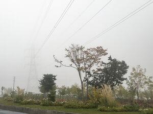 عکس/ هوای مه آلود تهران