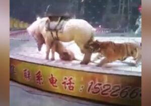 فیلم/ اسب نگونبخت سیرک در چنگال شکارچی