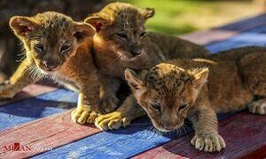 وضعیت تغذیه حیوانات در باغ وحش ارم چگونه است؟