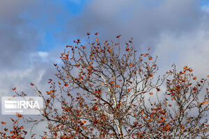 عکس/ جلوه زیبای پاییز در خراسان