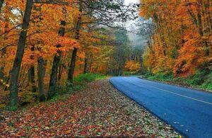 عکس/ هنرنمایی پاییز هزار رنگ