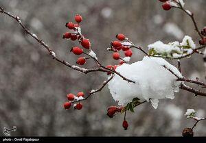 پیش بینی برف و باران ۲ روزه در برخی استانها