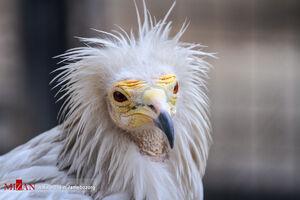 عکس/ پرترههای دیدنی از حیوانات