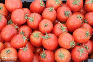 آغاز کاهش نرخ گوجه فرنگی در بازار