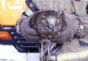ورود پرنده شکاری به مغازه +عکس