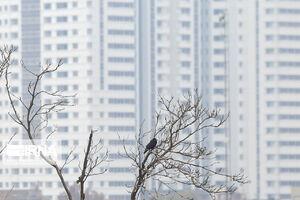 عکس/ وضعیت آلودگی هوای امروز تهران