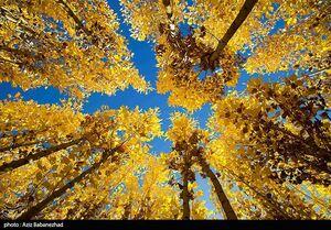 عکس/ طبیعت زیبای پاییزی لرستان