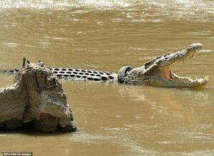 تفاوت تمساح پایتخت نشین با گاندوهای سیستان و بلوچستان!