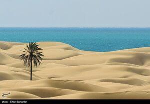 ساحل زيبا و بكر دَرَک