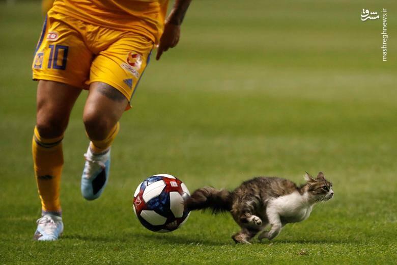 """پریدن یک گربه به داخل زمین فوتبال در شهر """"سالتلیکسیتی"""" آمریکا/ ۲۴ جولای ۲۰۱۹"""