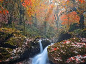 تصویری دیدنی از جلوه پاییزی جنگلهای فومن