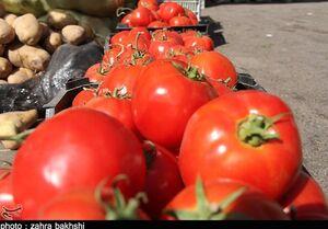 """""""گوجه"""" در عمده فروشیها ۹ هزار تومان+ جدول"""