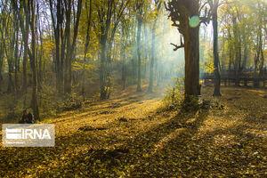 پاییز پارک جنگلی النگدره