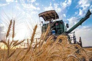 گندم از کشاورزان خریداری نشد/ واردات گندم کلید خورد +سند