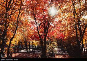 عکس/ طبیعت پاییزی بکر در جنگلهای گلستان