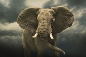 فیلم/ ورود فیل عصبانی به رستوران ارتش