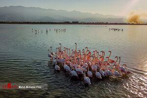 قتل عام هزاران پرنده مهاجر در دریاچه هامون
