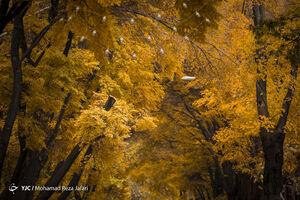 عکس/ پاییز در چهارباغ اصفهان