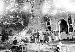 تهران قدیم درخت چنار