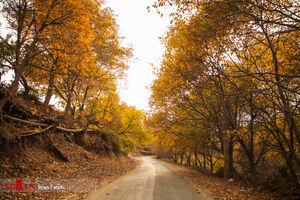 عکس/ یکی از زیباترین مناظر پاییزی در ایران