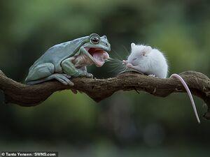 عکس/ صحنهای شگفت انگیز از در حیات وحش
