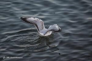 عکس/ پرندگان مهاجر دریاچه چیتگر