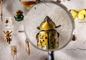 """این """"حشره"""" خون دایناسورها را میمکید +عکس"""