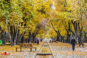 عکس/ پاییزیترین روزهای چهارباغ اصفهان