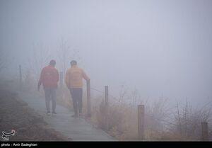 پارک کوهستانی دراک شیراز در مه