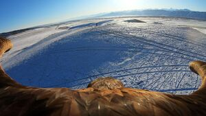 عکس/ نمای دیدنی از پرواز عقاب