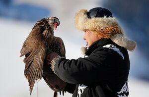 تصاویر جذاب از مسابقه شکار عقابها