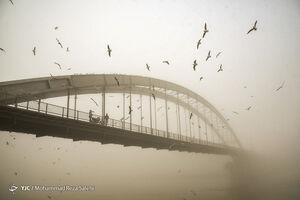 عکس/ اهواز در مه