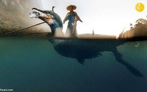 عکس/ قدمت هزار ساله ماهیگیری با پرنده