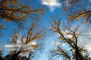 عکس/ آخرین روزهای پاییز در قم