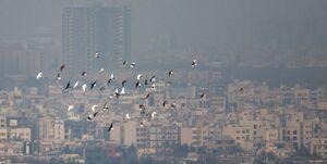 تداوم وضعیت ناسالم در هوای پایتخت