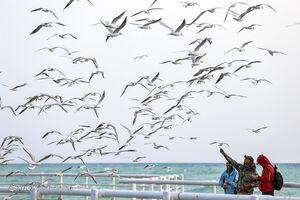 عکس/ مهمانان این روزهای آسمان کیش