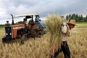 منابع ارزی که صرف حمایت از کشاورز خارجی میشود +سند