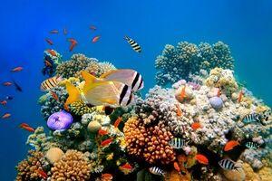 انقراض انواع آبزیان در خلیج فارس