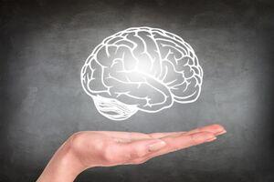 مغز نمایه