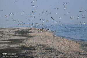 عکس/ جاذبه دیدنی سواحل آستارا