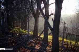 عکس/ زمستان باغات روستای چالسرا